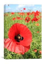 Rogue Poppies, Canvas Print