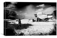 Harvest Shoot, Canvas Print