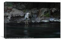 Heron at River Don, Canvas Print