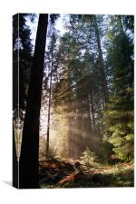 Sunray Forest, Canvas Print