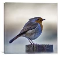 Robby the Robin, Canvas Print