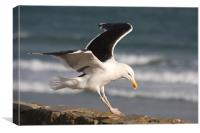Great Black-Backed Gull, Canvas Print
