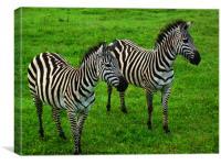 Zebras of Ngorongoro Crater, Canvas Print
