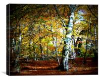 Epping Forest, Canvas Print