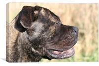 Beth Bullmastiff dog, Canvas Print