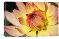 Dhalia yellow and red flower, Canvas Print