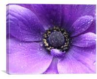 Purple flower in the rain, Canvas Print