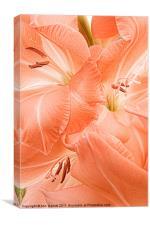 Peach Gladioli Swirl, Canvas Print