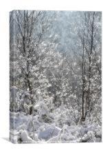 Winter Sparkles, Canvas Print