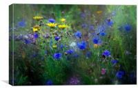 Cornflower Meadow, Canvas Print