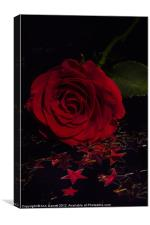 Party Rose, Canvas Print