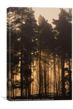 Woodland Sunrise - 1, Canvas Print