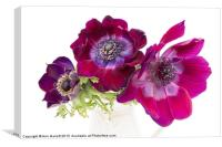 Anemone Trio, Canvas Print