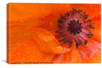 Poppy Tears, Canvas Print