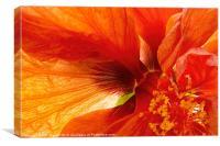 Hibiscus Secret, Canvas Print