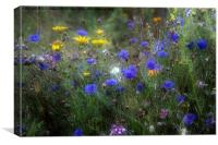 Wild Flowers in France, Canvas Print