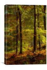Cannock Chase Autumn, Canvas Print