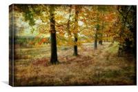 Autumn on Cannock Chase, Canvas Print