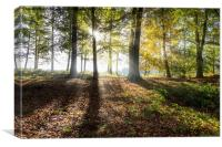 Autumn Rays, Canvas Print