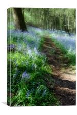 Bluebell Rise, Canvas Print