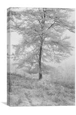 A Single Infrared Beech Tree, Canvas Print