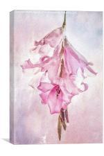 Angel's Fishing Rod, Canvas Print