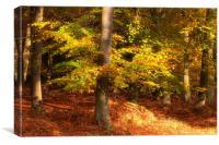 Autumn Glory, Canvas Print
