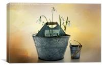 Snowdrops in a Bucket, Canvas Print