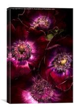 Red Anemones A Digital Painting, Canvas Print