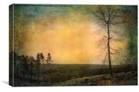 Solitary Tree in the Snow, Canvas Print