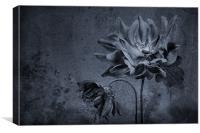 Moody Anemones, Canvas Print