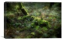 Mossy Secrets, Canvas Print