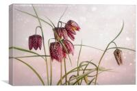 Snake's Head Fritillary , Canvas Print