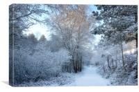 Snowy Path, Canvas Print