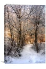 Deer Path in the Snow, Canvas Print