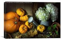 Pumpkins and White Hydrangea, Canvas Print