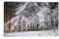 Snow Bride, Canvas Print