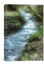 Mossy Stream, Canvas Print
