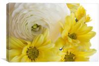 Yellow on White, Canvas Print