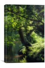 Sun Dappled Stream - New Forest, Canvas Print