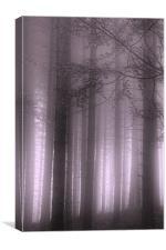 Purple Mist, Canvas Print