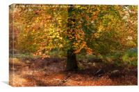 Autumn Colours on Cannock Chase, Canvas Print