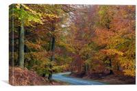 Autumn Road, Canvas Print