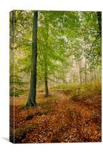 Autumn Path, Canvas Print