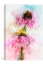 Echinacea Water Splash, Canvas Print
