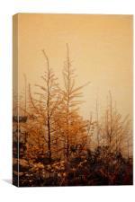 Little Larches, Canvas Print