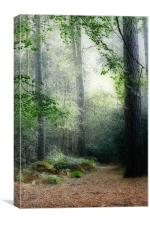 Faerie Forest, Canvas Print