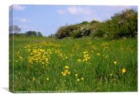 BUTTERCUP MEADOW, Canvas Print
