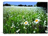 DAISY FIELD WITH INK OUTLINES, Canvas Print