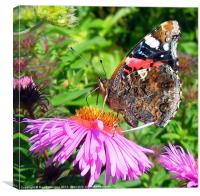 BUTTERFLY SIDE VIEW, Canvas Print